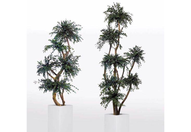 Arbre Stabilisé Parvifolia Greenwood Plante Stabilisée d'Intérieur