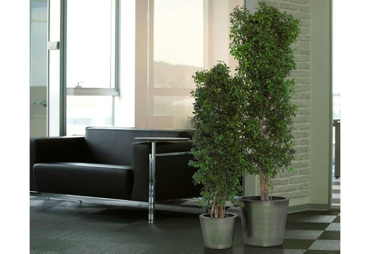 Arbre Stabilisé d'Intérieur Tenuifolium Greenmood Plante Stabilisée
