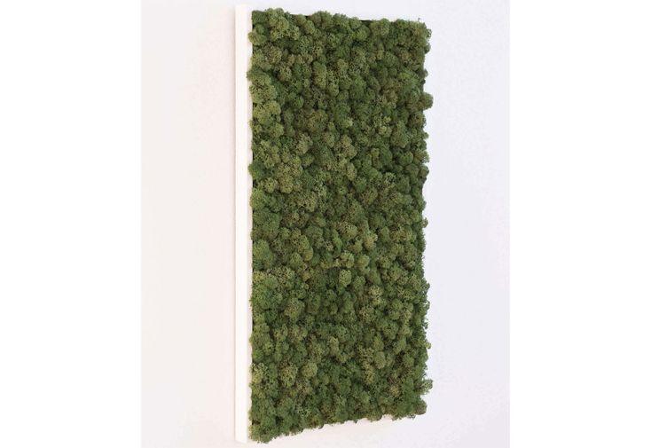 Cadre Végétal Rectangulaire Lichen Stabilisé Greenmood Khloe
