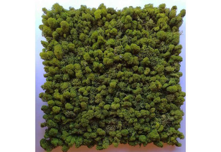 Panneau mur végétal en lichen stabilisé Volum Agencement
