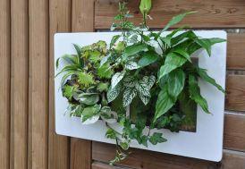 cadre vegetal mural blanc