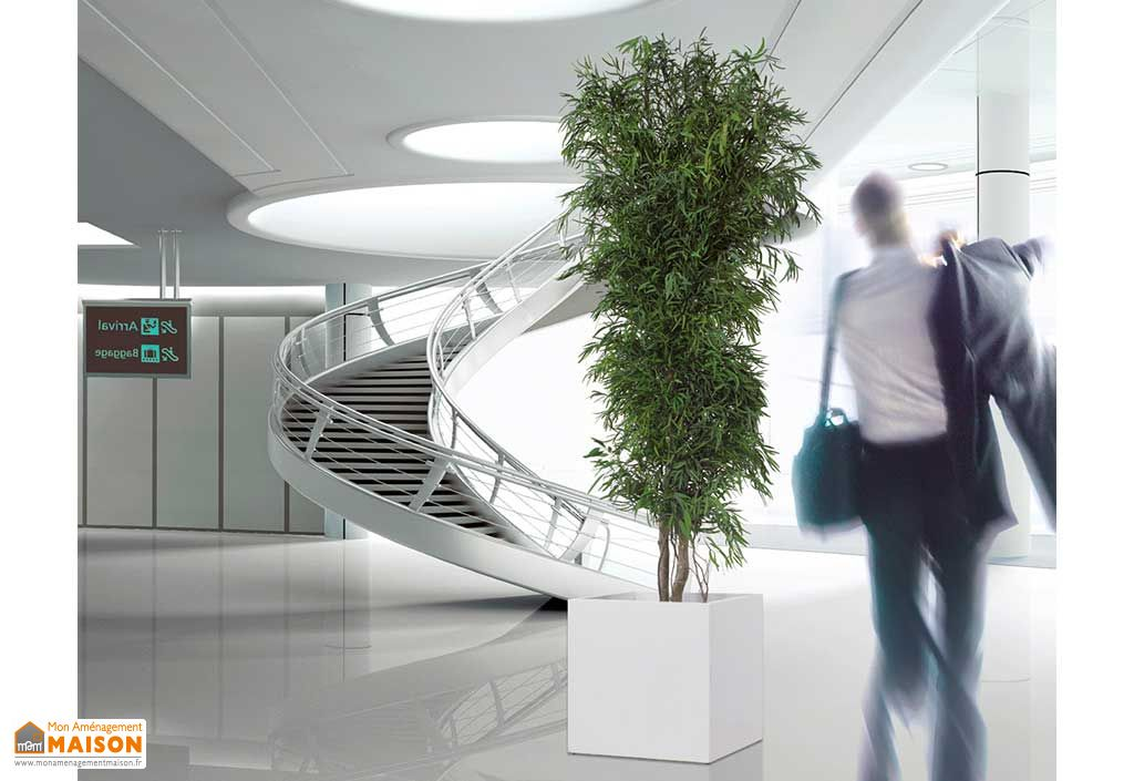 Arbre Stabilisé Eucalyptus Nicoly Vert Greenmood Plante Stabilisée